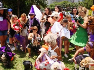 In Rio, Halloween is celebrated by dogs as well as people, photo by Housepress.