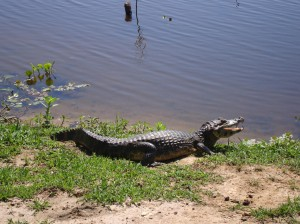 Nature's entertainment in South Pantanal, Mato Grosso do Sul