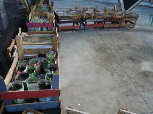 The seedlings will be planted at the end of November, Rio de Janeiro, Brazil News