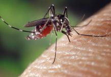 Brazil,The Aedes aegypti mosquito transmits the Zika, dengue and Chikungunya viruses,