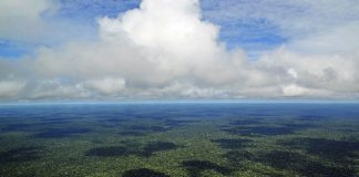 Brazil, Amazon,Brazil's Amazon forest is rich in minerals and biodiversity